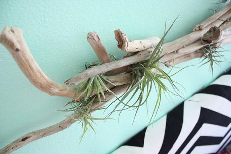 Driftwood2