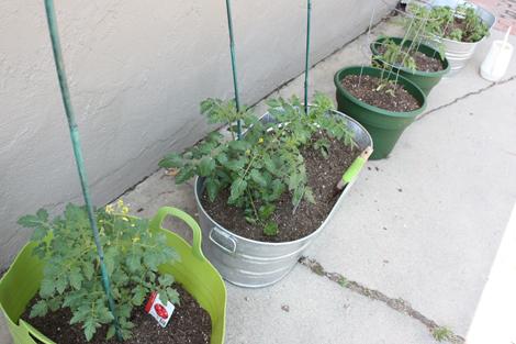 Gardenstart3