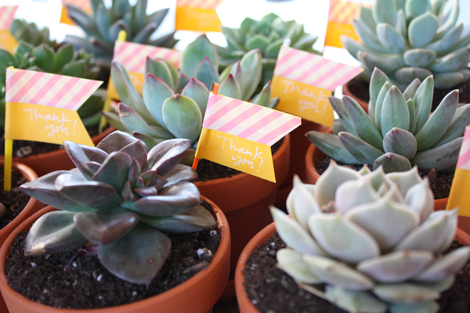 Succulent-favors