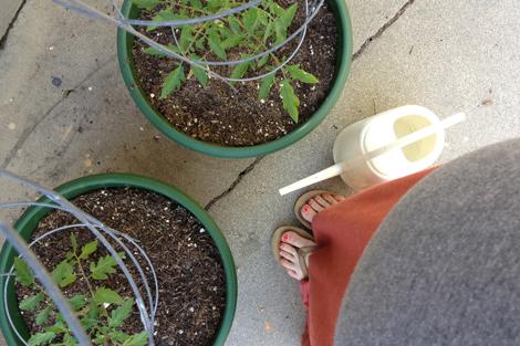 Gardenstart2
