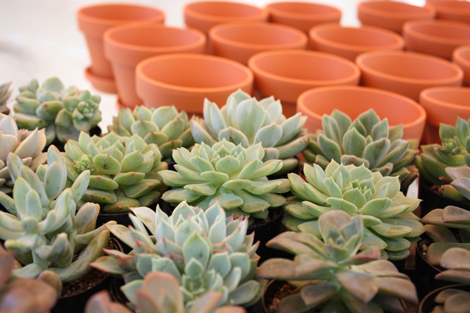 Potting-succulent-favors2
