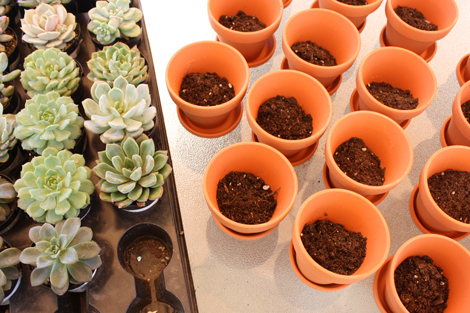 Potting-succulent-favors