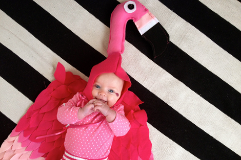 Flamingobaby