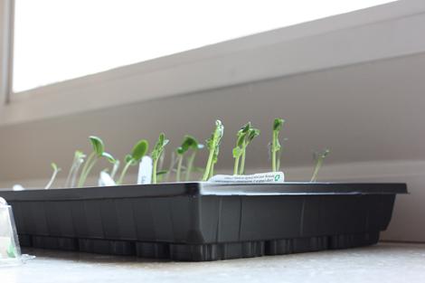 Seedlings2