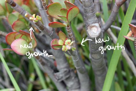 Jadegrowth
