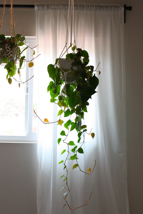 I Have Five Hanging Plants In My House Right Now Three Our Bedroom And Two Office Love Them An Inropriate Amount