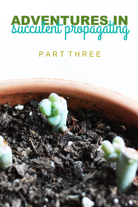 Succulentpart3