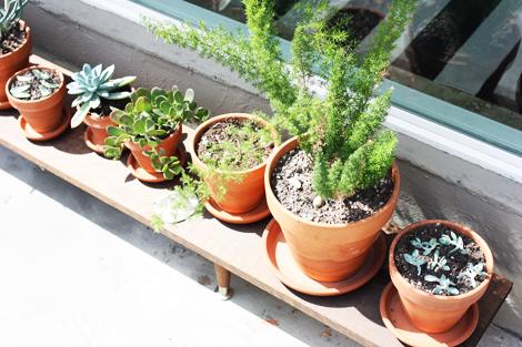 Succulentpart3g