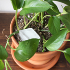 Planttip