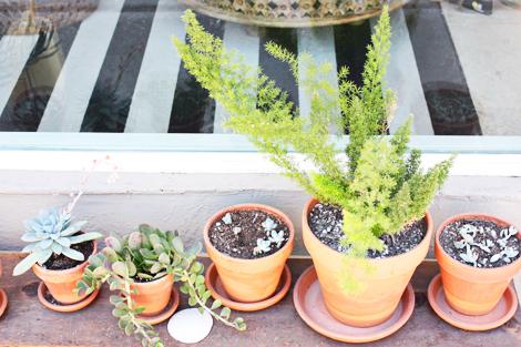Succulent4d