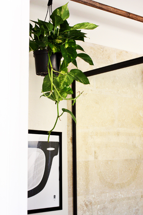 Hangingplant